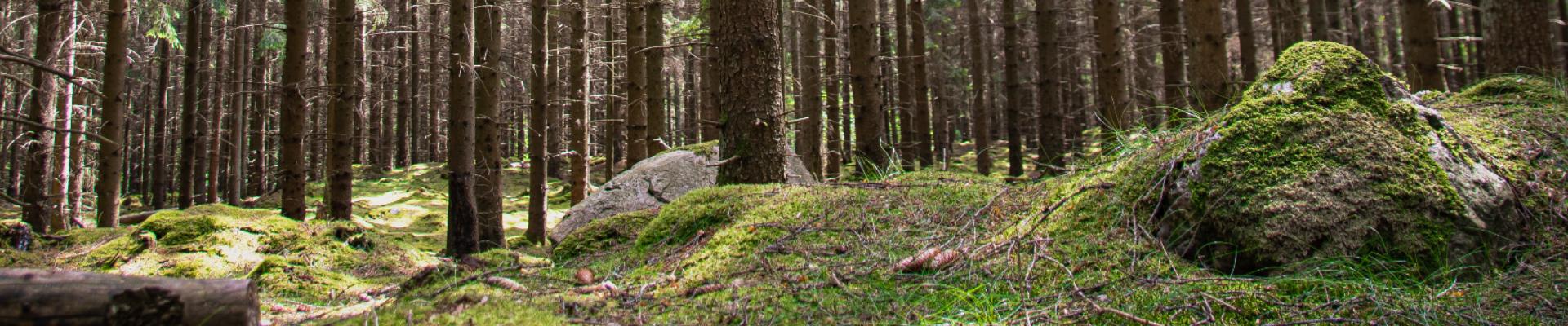 Asume Võrumaa metsade vahel Verijärvel. Elevandile omane enesekindlus ja töökus on meid viinud liimpuitkomponentide valdkonna turuliidriks terves Euroopas.