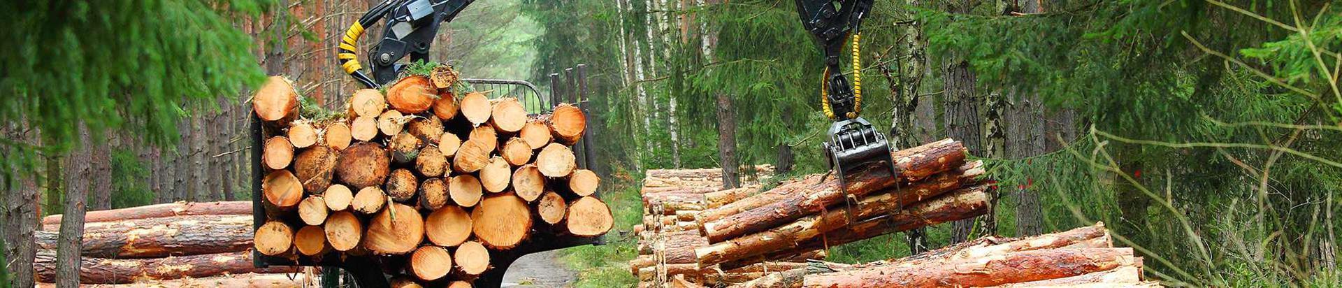 11477296_splitwood-group-ou_26273108_xl.jpg