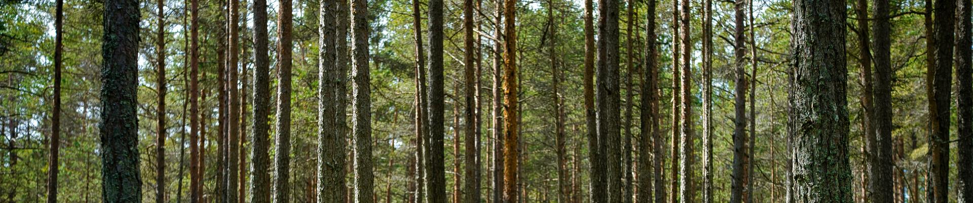 Stora Enso on maailmaturul juhtiv taastuvate lahenduste pakkuja pakendamise, biomaterjalide, puitkonstruktsioonide ja paberi vallas, olles osa biomajandusest