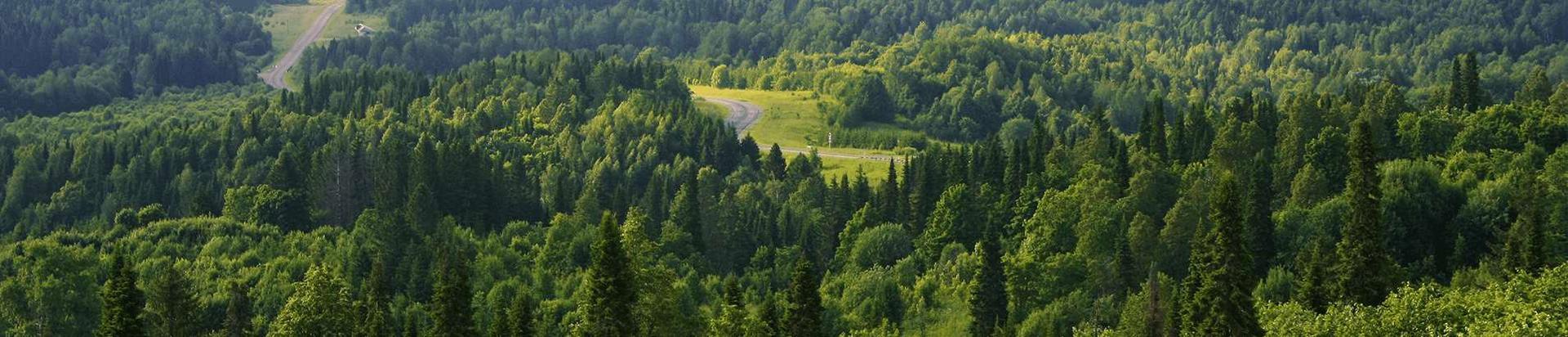 Tarkvarad metsa- ja puidusektorile