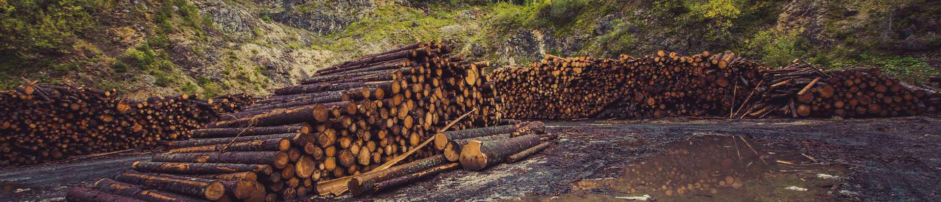 metsatööd, puidu- ja paberitööstus, üldehitus