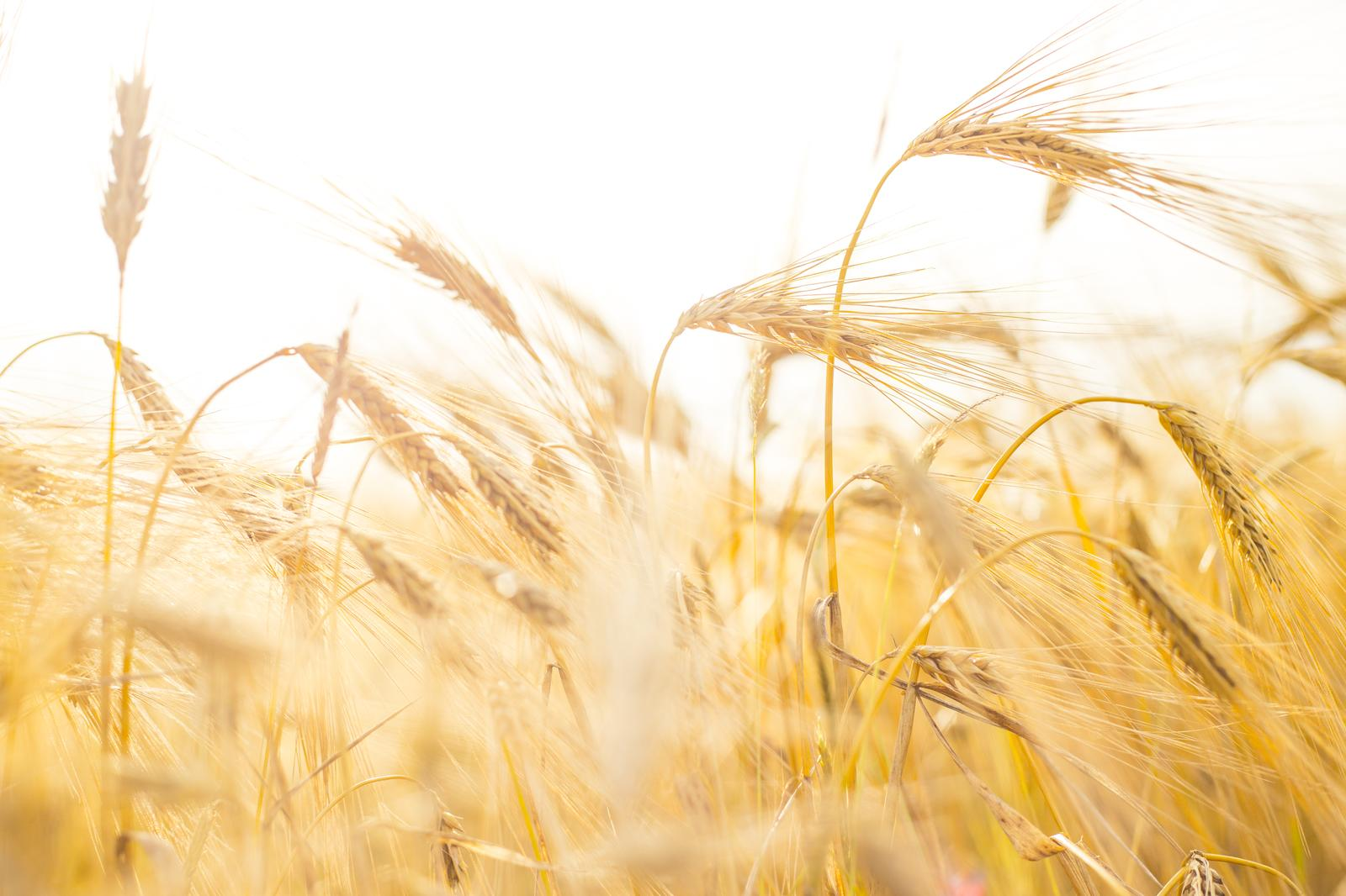 Growing of cereals (except rice), leguminous crops and oil seeds in Ida-Viru county