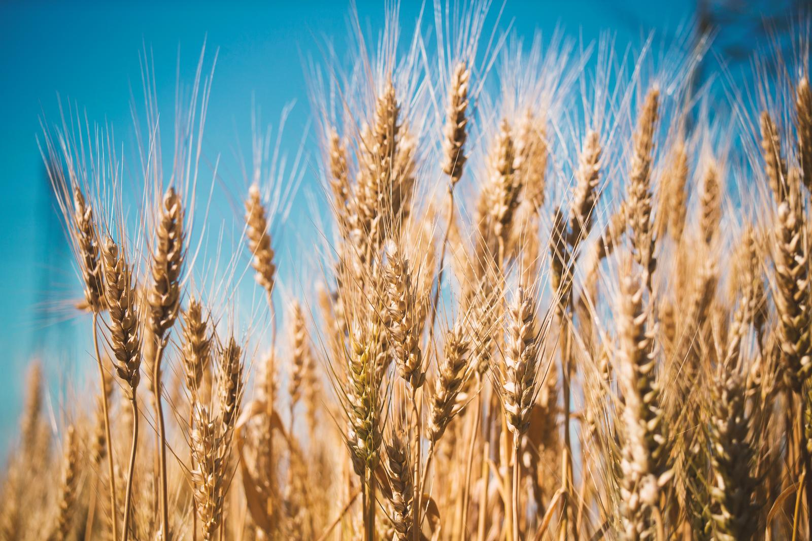 Growing of cereals (except rice), leguminous crops and oil seeds in Järva county