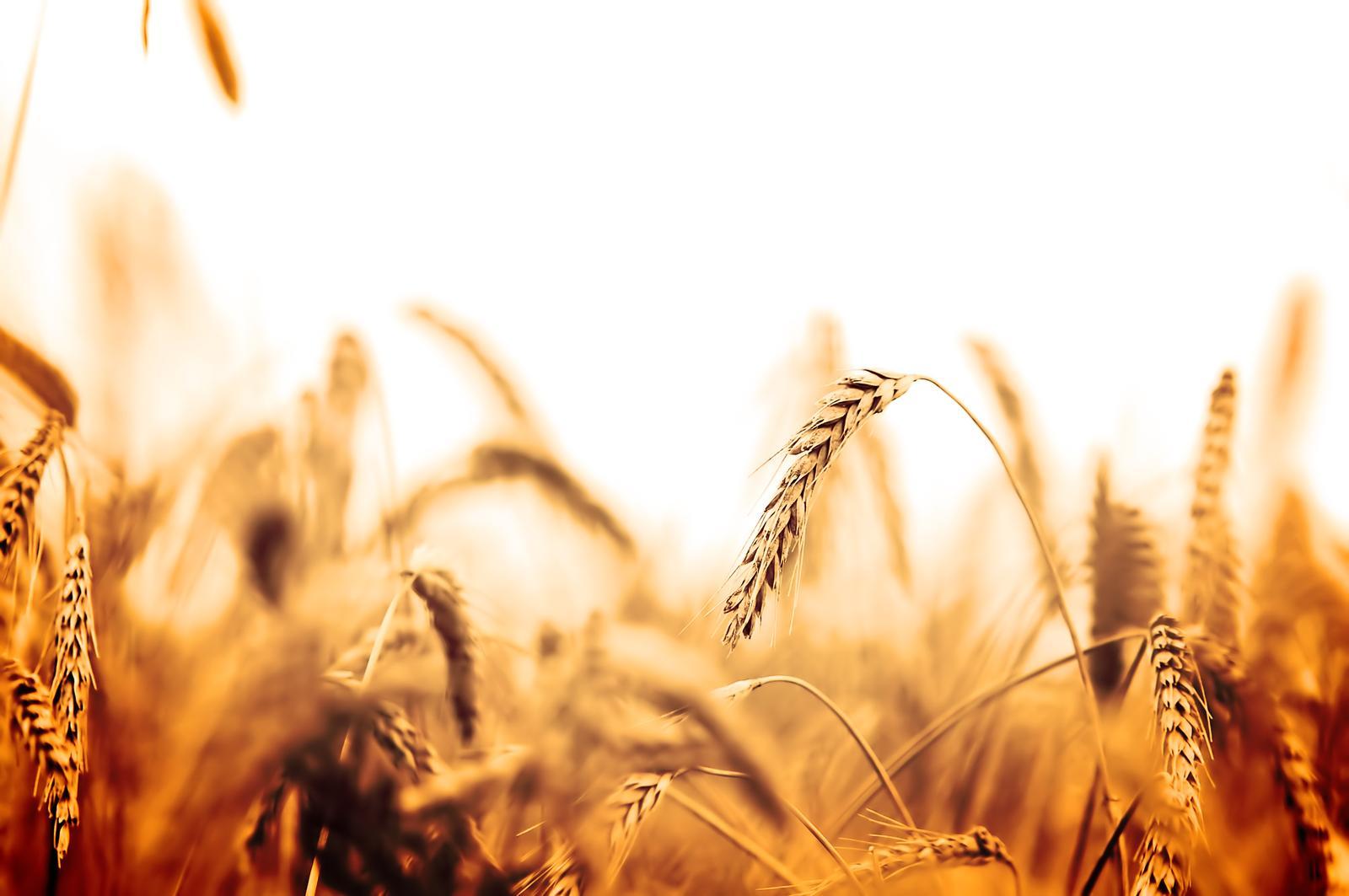 Growing of cereals (except rice), leguminous crops and oil seeds in Lääne-Viru county