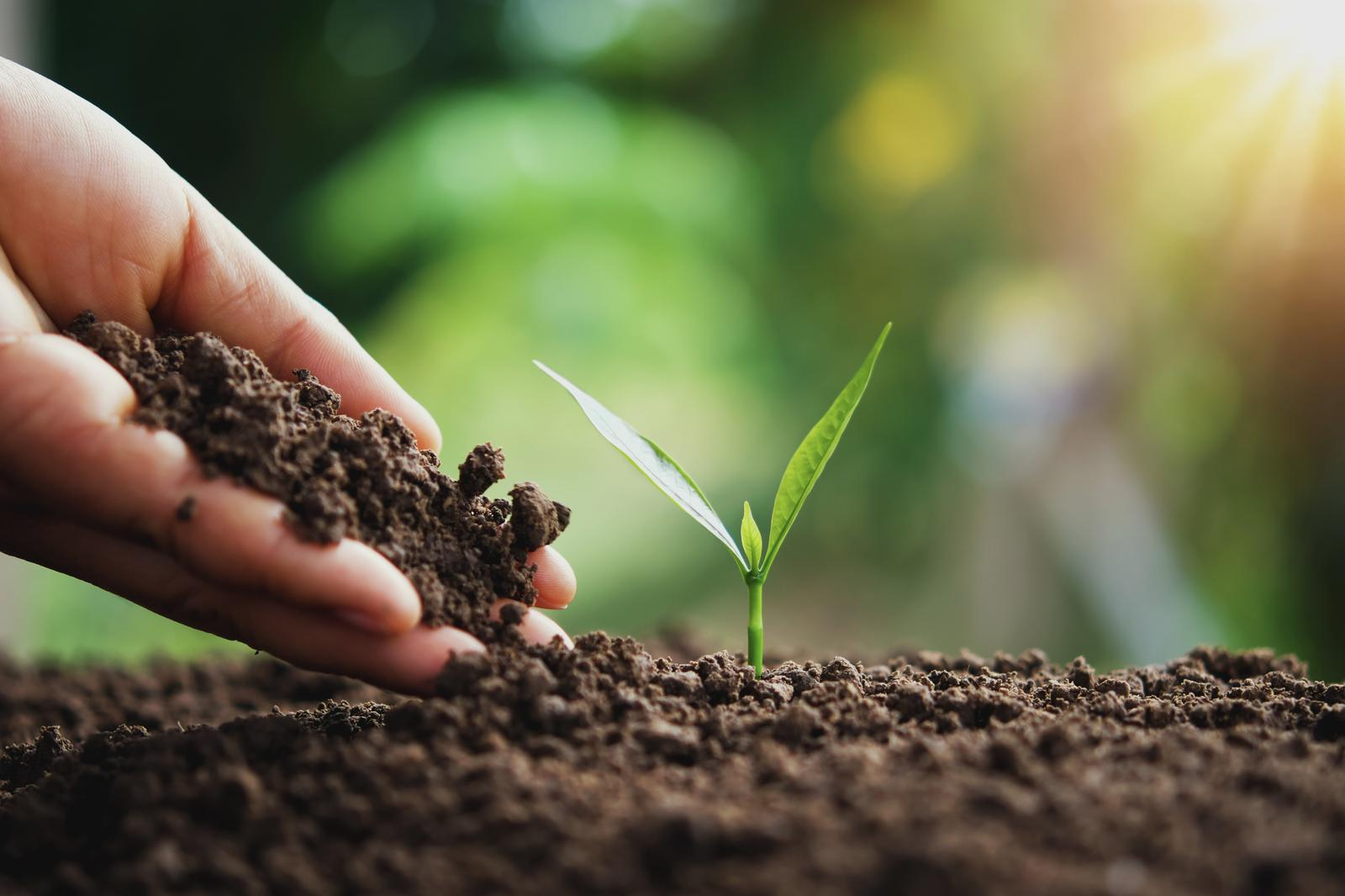 Köögivilja kasvatus Eestis