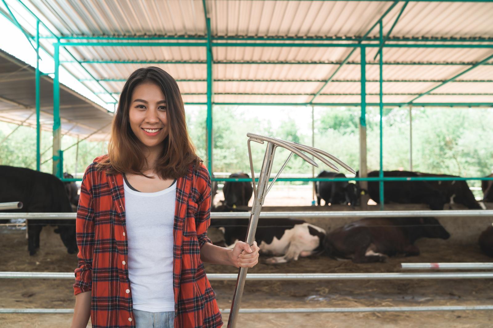 Piimakarjakasvatus Ida-Virumaal