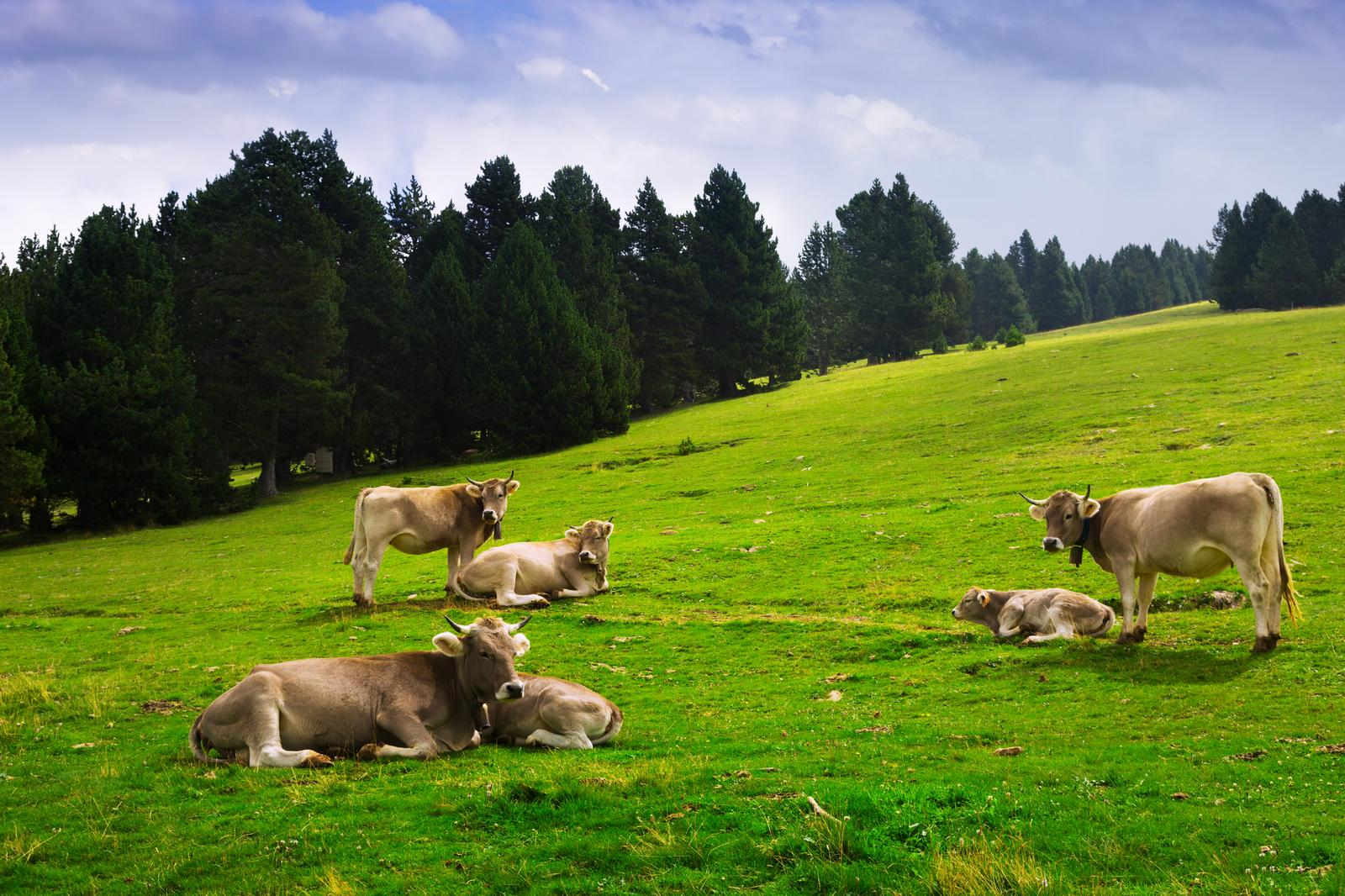 Raising of other cattle and buffaloes in Saare county