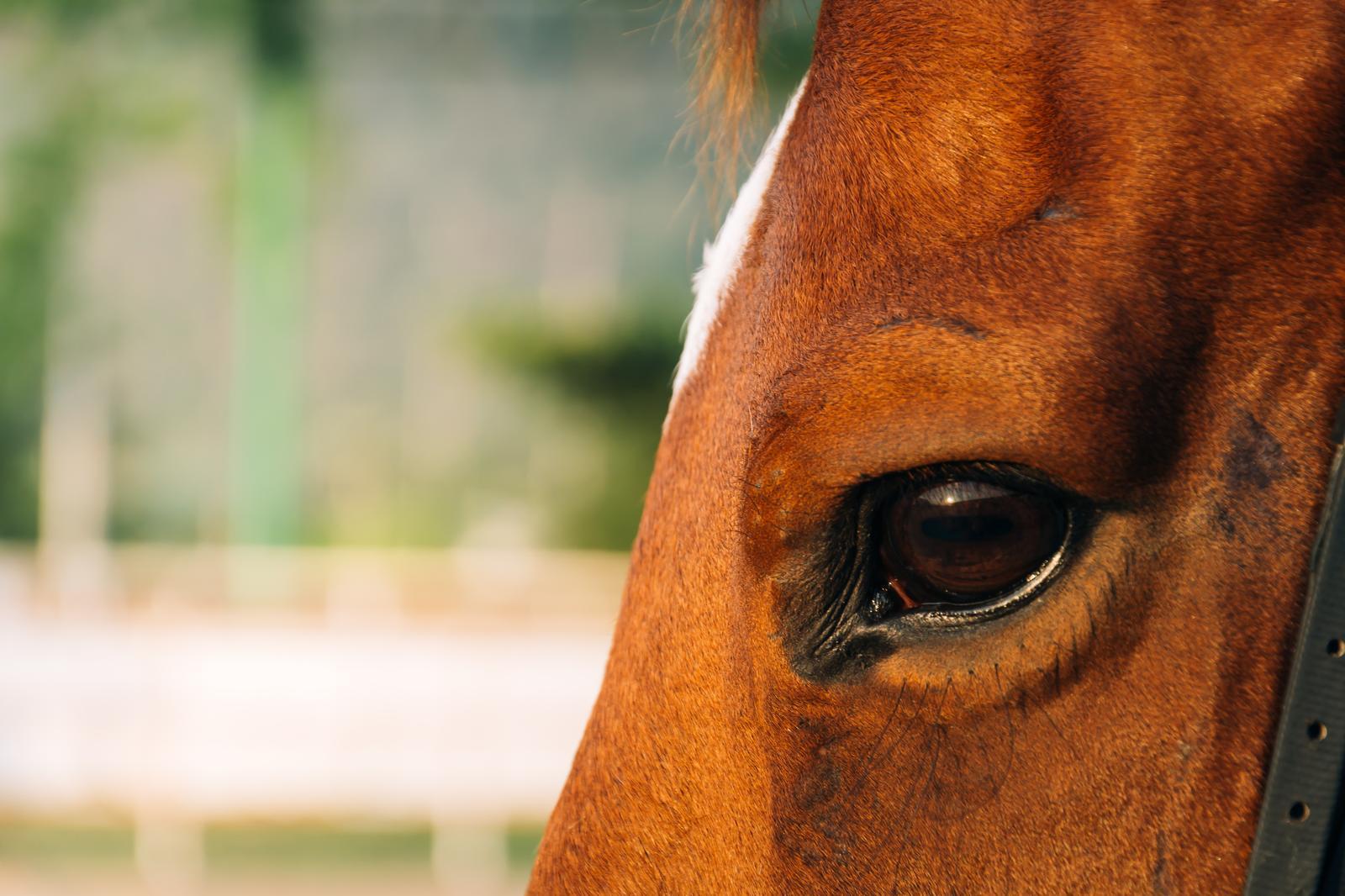 Hobusekasvatus Läänemaal