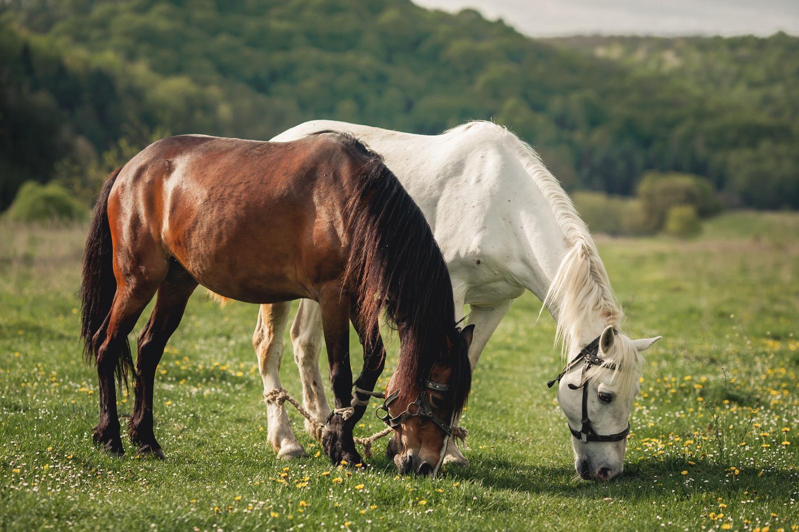 Hobusekasvatus Pärnumaal