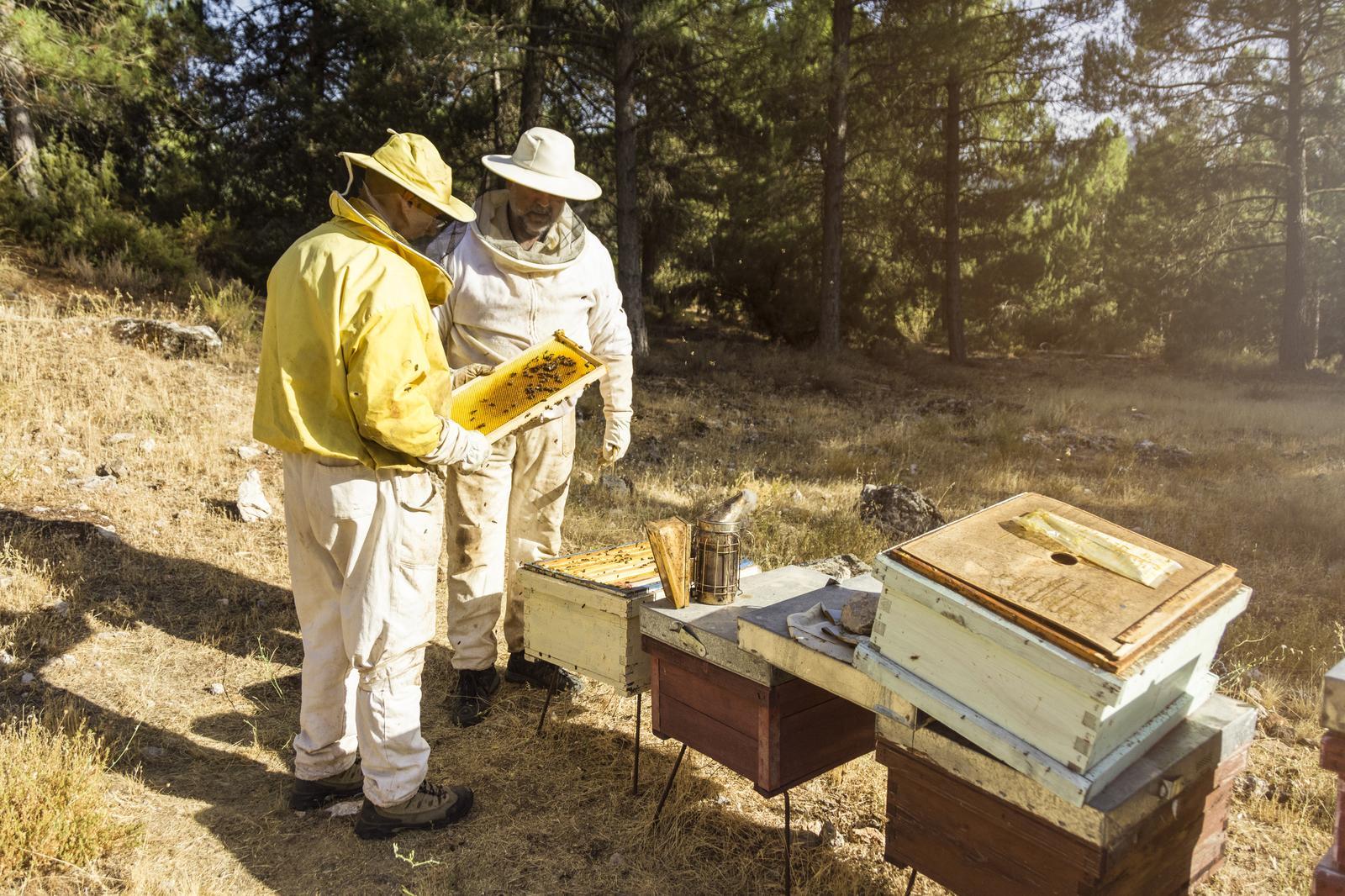 Bee keeping in Lääne-Viru county
