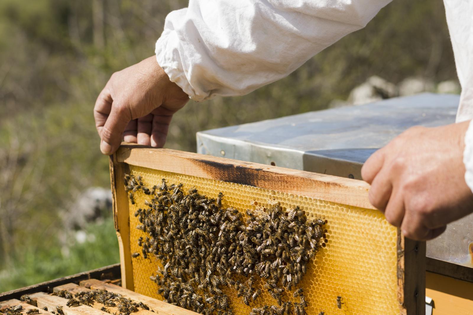 Bee keeping in Pärnu county