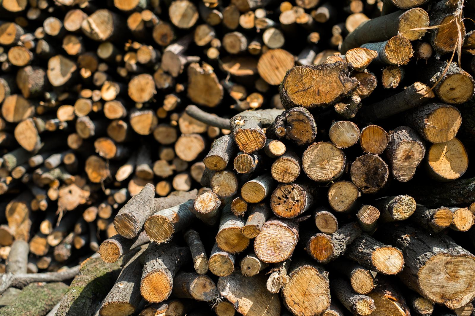 Silviculture and other forestry activities in Kuressaare