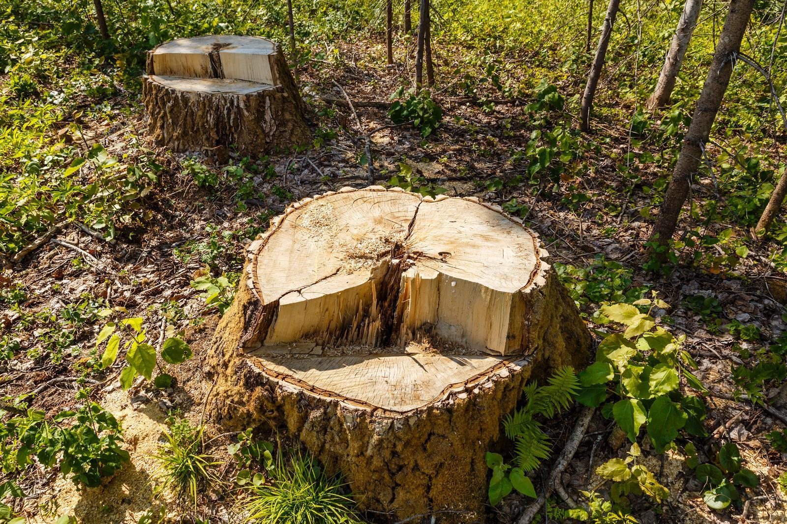 Puidu ja ehitusmaterjalide vahendamine Eestis