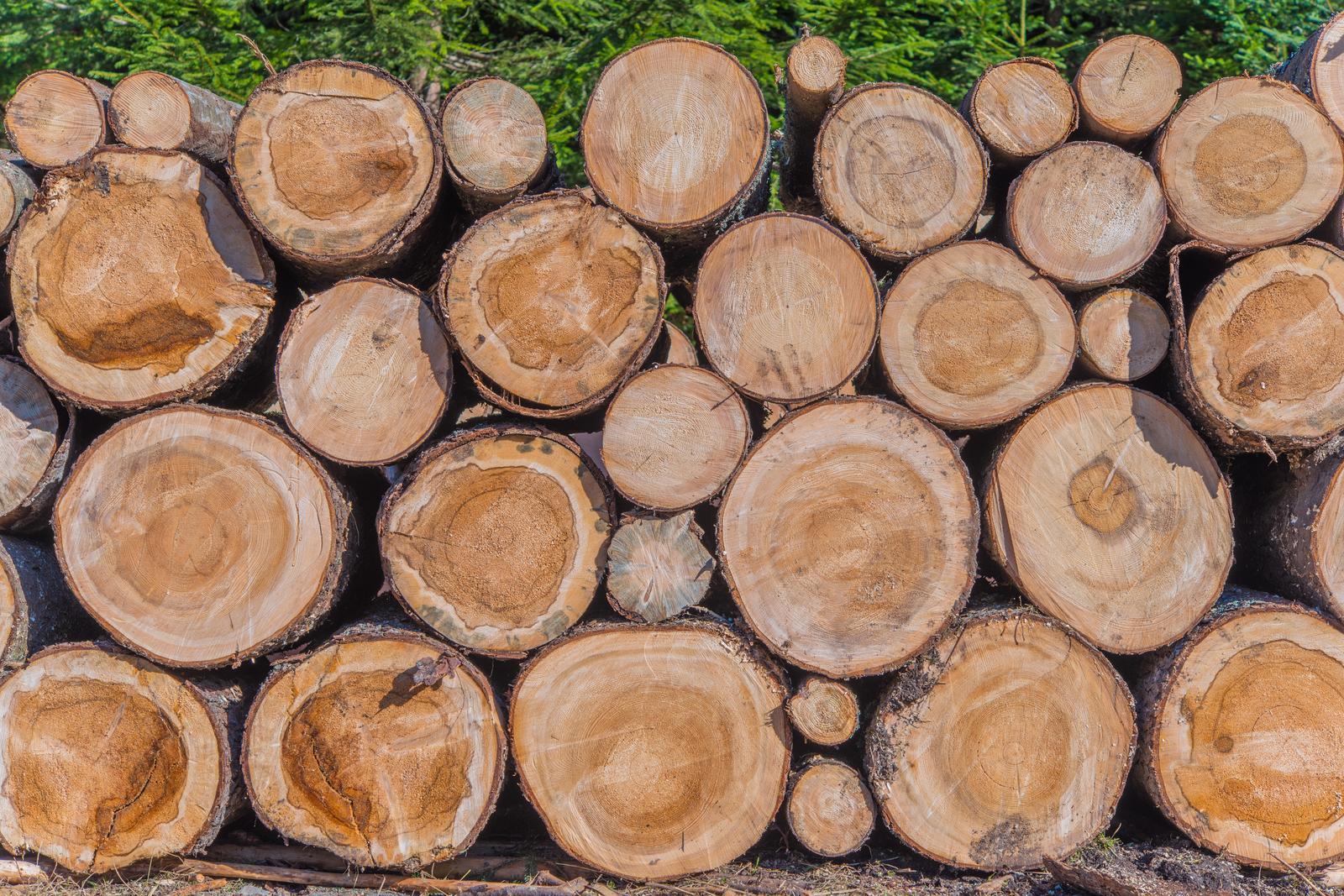 Logging in Harju county