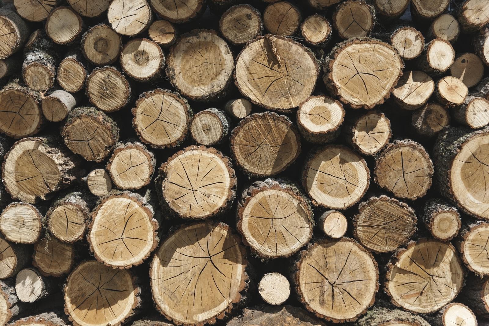 Logging in Lääne-Viru county