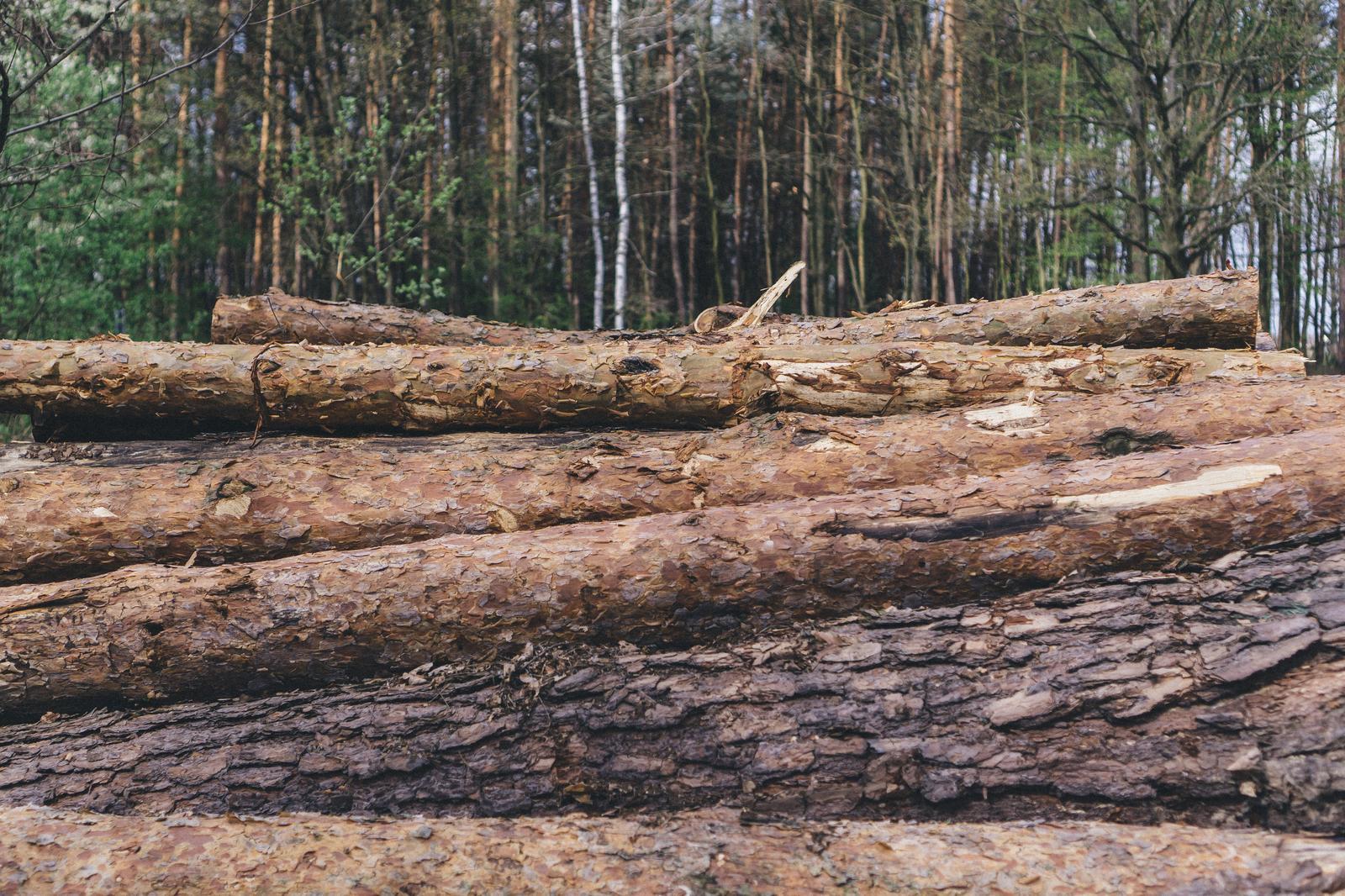 Metsaraie Tallinnas