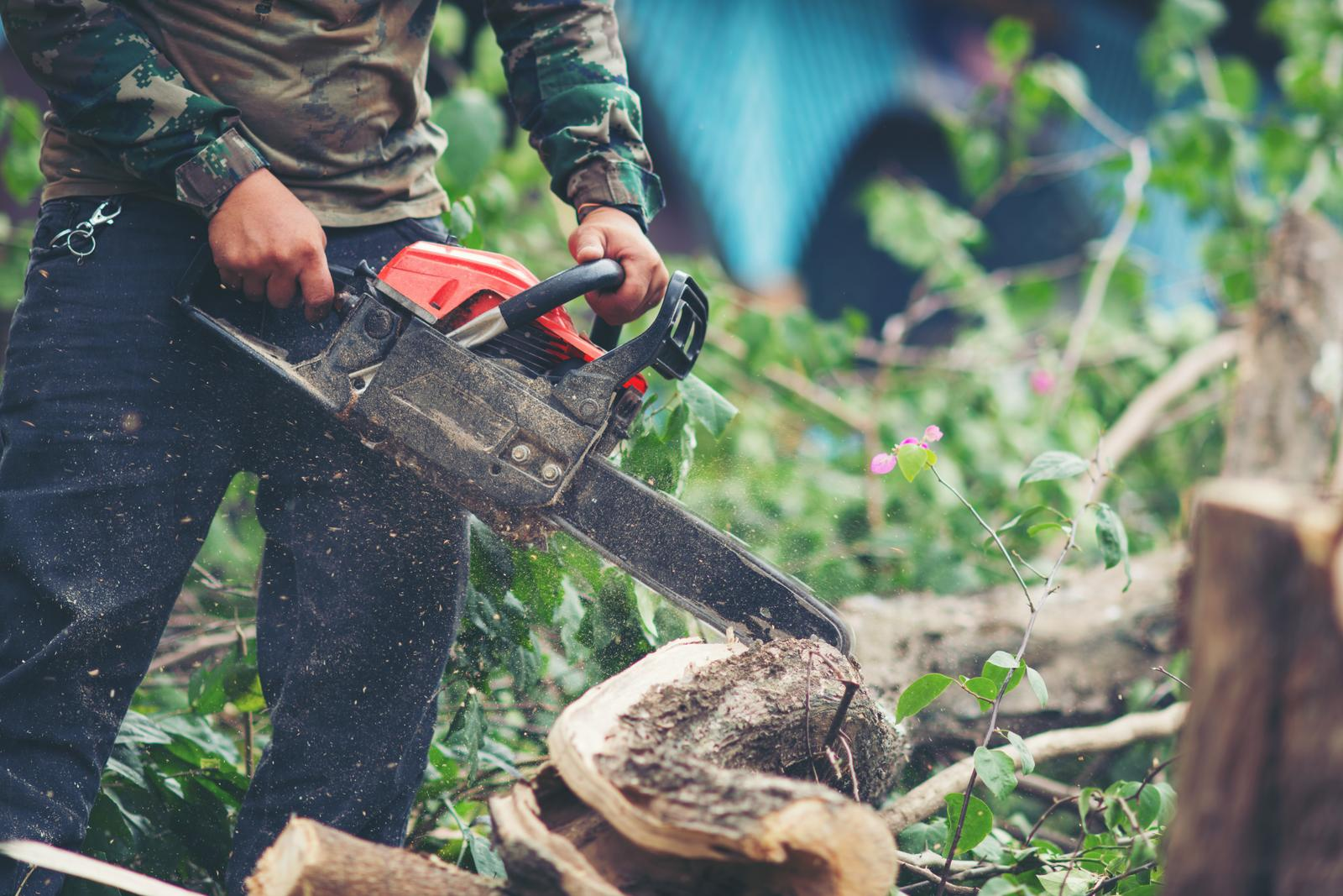 Support services to forestry in Elva