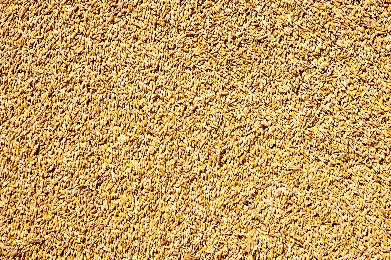 Wholesale of grain, unmanufactured tobacco, seeds and animal feeds in Põlva county