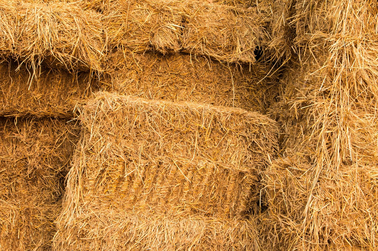 Wholesale of grain, unmanufactured tobacco, seeds and animal feeds in Tartu