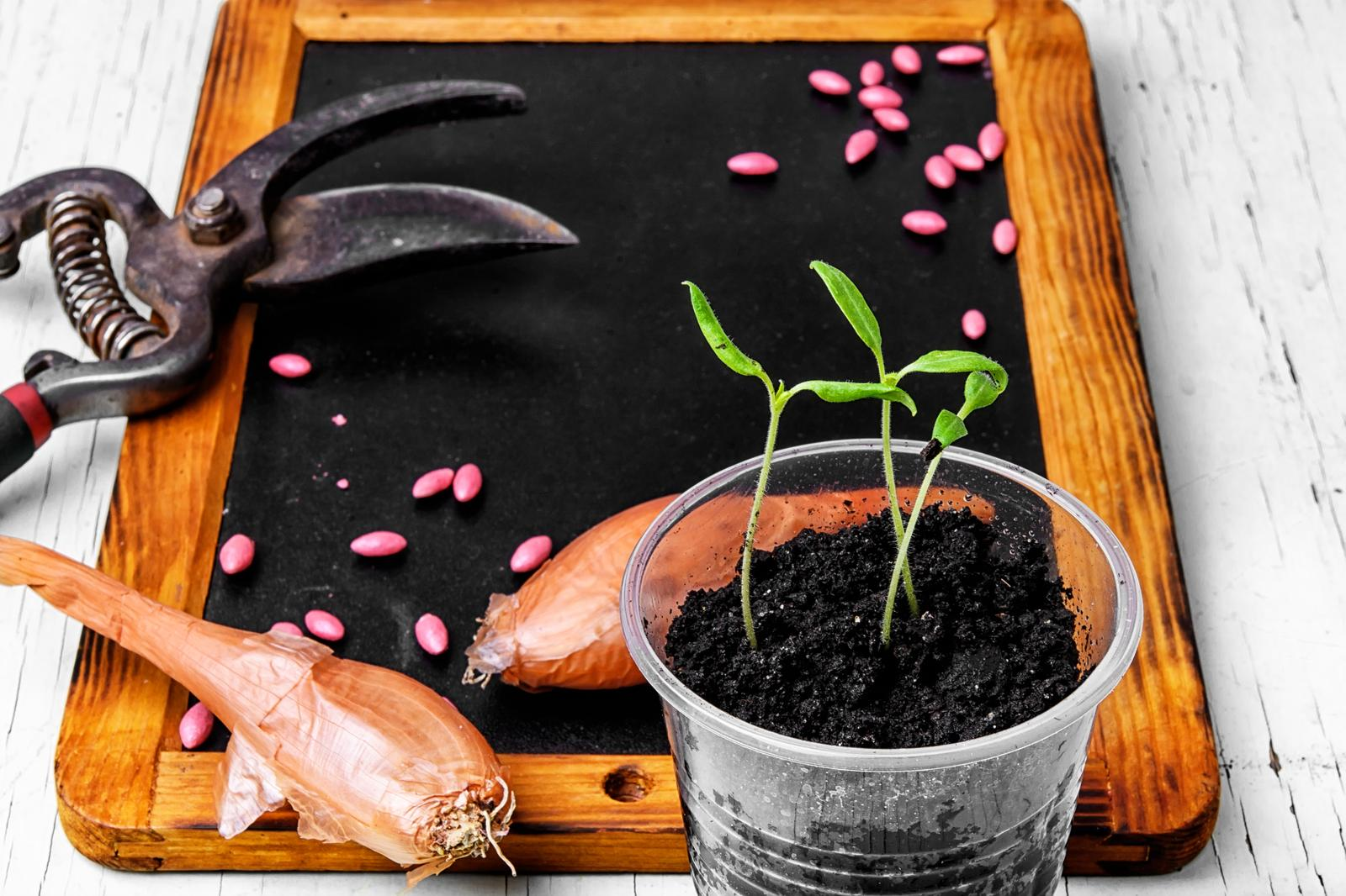 Retail sale of flowers, plants, seeds, transplants and fertilizers in Jõgeva