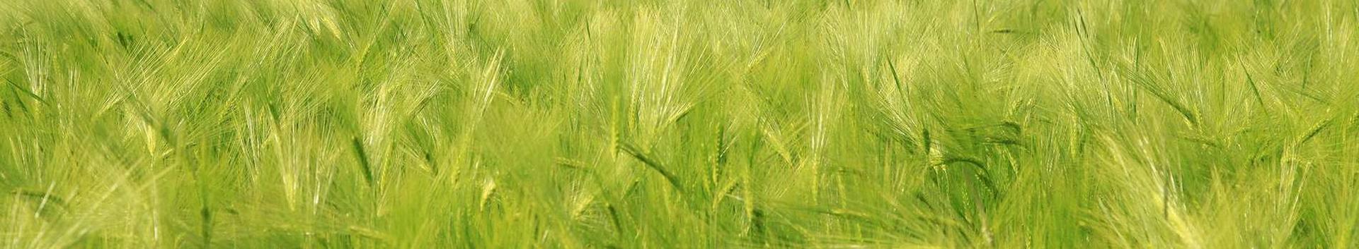 põllumajandustootjad, põllumajandussaadused, toiduainetetööstus