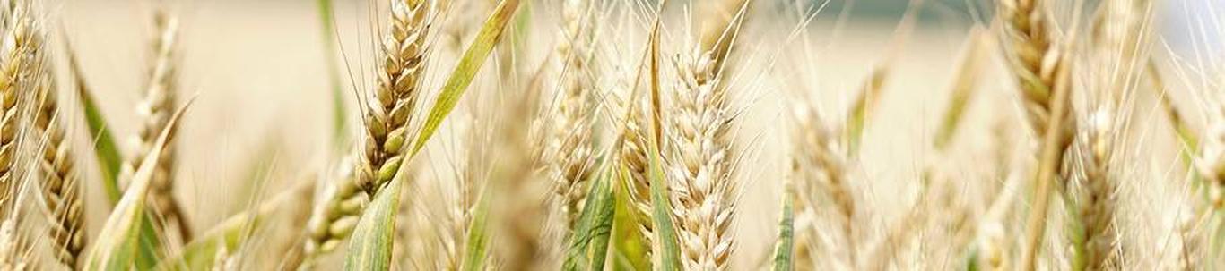 SANGASTE AGRO OÜ valdkond on teravilja- (v.a riis) ja kaunviljakasvatus;  õlitaimeseemnete kasvatus. Samas valdkonnas (EMTAK 01111) on tegutsevaid ettevõtteid 2