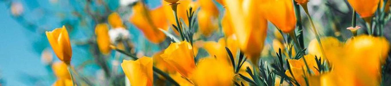 MARKUSE TALU OÜ alustas peaaegu 4 aastat tagasi, mil juhatuse liige Raul K. selle asutas, kes alles alustas ettevõtlusega. MARKUSE TALU OÜ valdkond on lillekasvatus. Samas valdkonnas (EMTAK 01191) on tegutsevaid