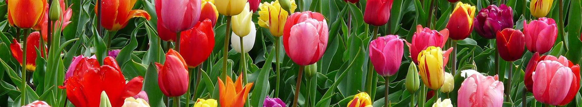 lilleseadetarvikud, lillekasvatus
