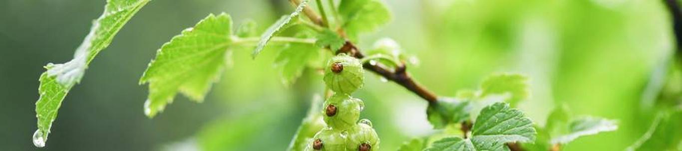 MAHLAMETSA OÜ valdkond on õun- ja luuviljaliste puuviljade kasvatus. Samas valdkonnas (EMTAK 01241) on tegutsevaid ettevõtteid 2021 aasta seisuga kokku 36 tükki