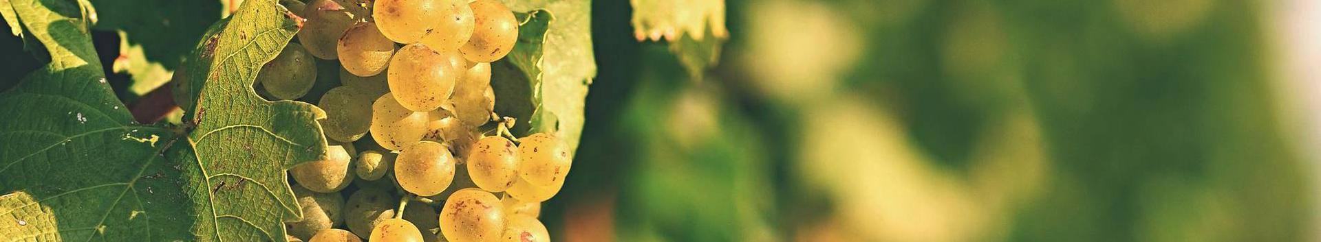 01241_puuviljakasvatus_77742696_xl.jpg