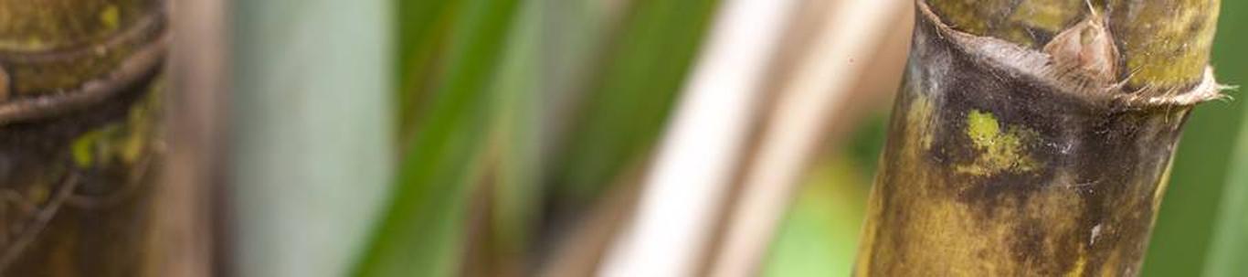 01291_muude-taimede-kasvatus_15399018_m_xl.jpg