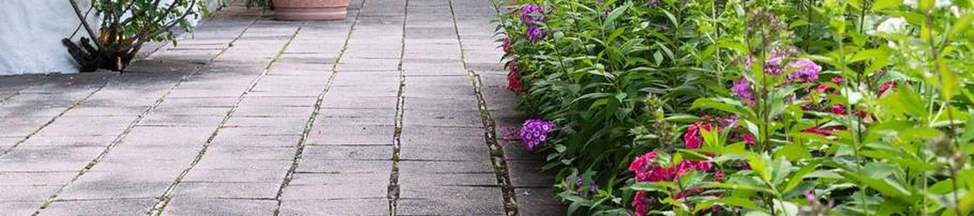 01291_muude-taimede-kasvatus_26050044_m_xl.jpg
