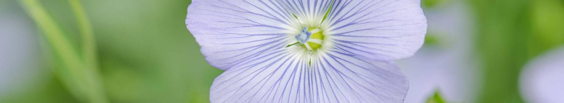 01291_muude-taimede-kasvatus_28765775_xl.jpg