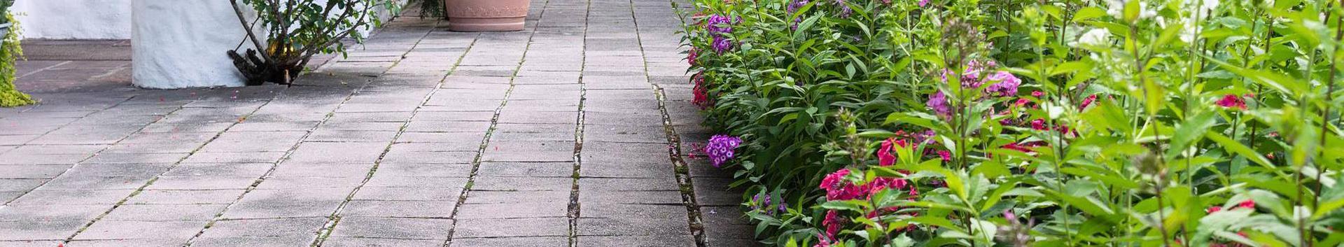 01291_muude-taimede-kasvatus_31278490_xl.jpg