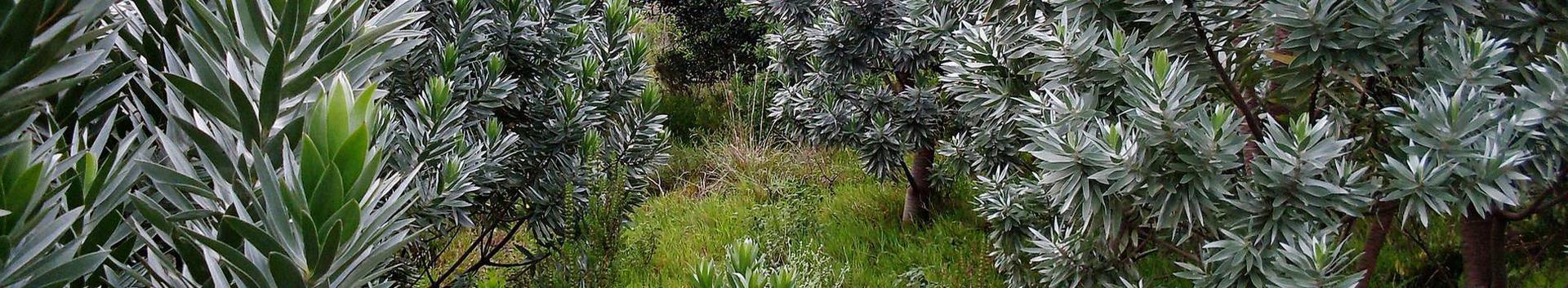 01291_muude-taimede-kasvatus_52476519_xl.jpg