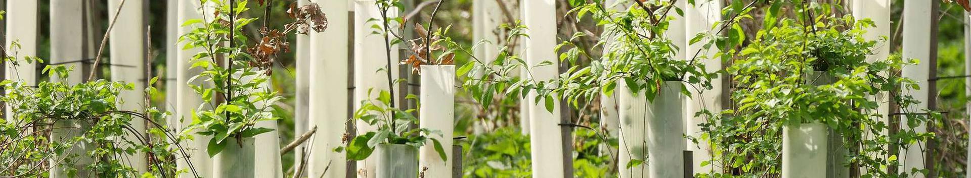01291_muude-taimede-kasvatus_65252406_xl.jpg