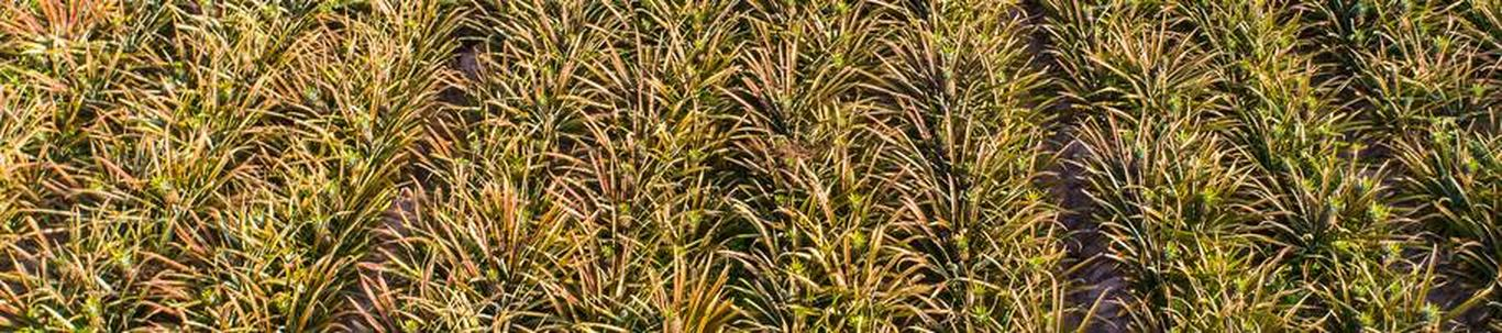 01291_muude-taimede-kasvatus_72053561_m_xl.jpg