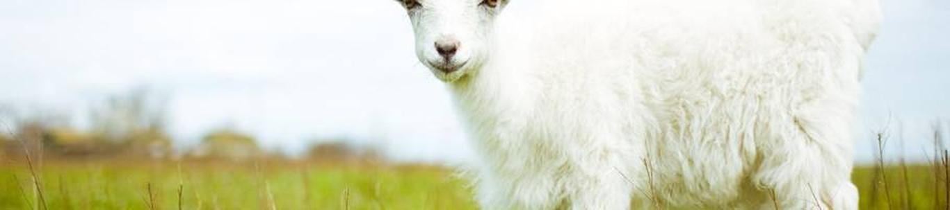 JANNO-MARTIN REIDOLF FIE alustas peaaegu 4 aastat tagasi, mil juhatuse liige Janno-Martin R. selle asutas, kes alles alustas ettevõtlusega. JANNO-MARTIN REIDOLF FIE valdkond on lamba- ja kitsekasvatus. Samas