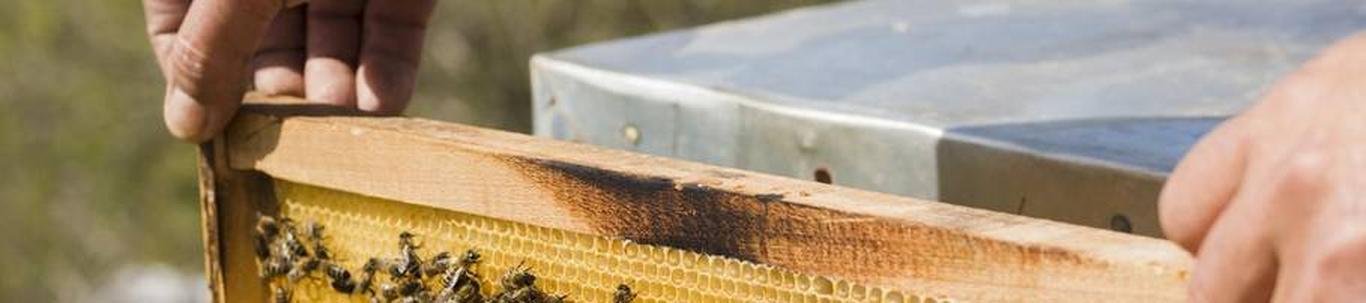 SAAREMETSA MESI OÜ alustas peaaegu 4 aastat tagasi, mil juhatuse liige Ants P. selle asutas, omades selleks ajaks ettevõtluskogemust ligikaudu 12 aastat. SAAREMETSA MESI OÜ valdkond on mesindus. Samas valdkonnas