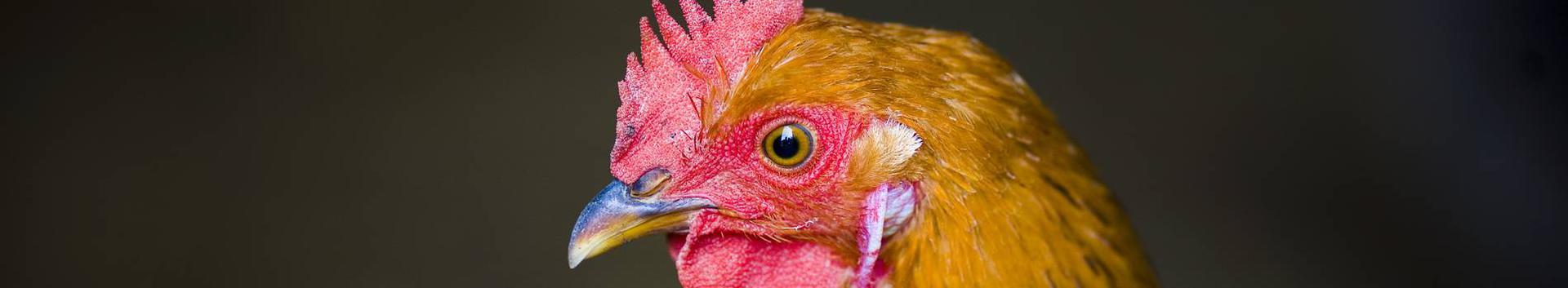 01621_loomakasvatuse-abitegevused_39090403_xl.jpg