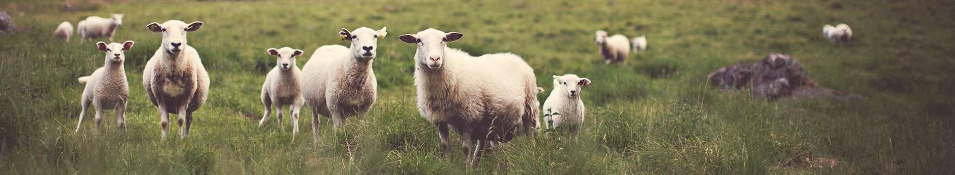 01621_loomakasvatuse-abitegevused_59434309_xl.jpg
