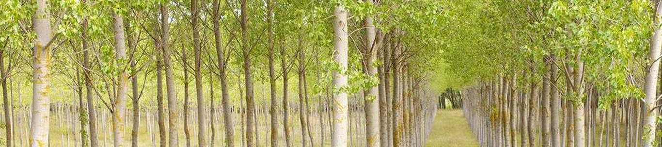 KUKERA TALU FIE alustas peaaegu 23 aastat tagasi, mil juhatuse liige Ülo K. selle asutas, kes alles alustas ettevõtlusega. KUKERA TALU FIE valdkond on metsakasvatus ja muud metsamajanduse tegevusalad. Samas