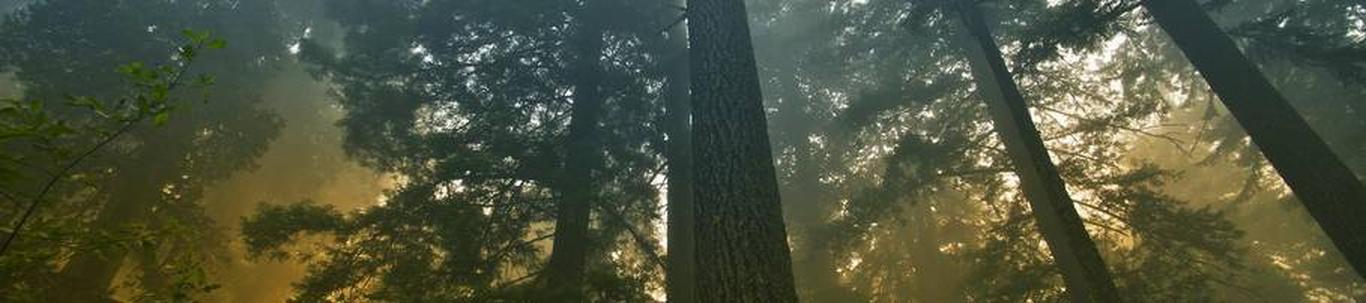 MARGUS PLOOM FIE alustas peaaegu 22 aastat tagasi, mil juhatuse liige Margus P. selle asutas, kes alles alustas ettevõtlusega. MARGUS PLOOM FIE valdkond on metsakasvatus ja muud metsamajanduse tegevusalad. Samas