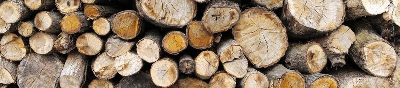 Maastiku hooldus ja korrashoid, metsaraie