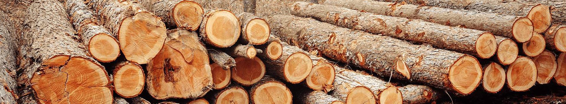 metsatööd, puidu- ja paberitööstus, hanketeenused teistele ettevõtetele, allhanketeenused (ärialane abi), äriinfo, turu-uuringud, äriuuringud, majandusprognoosid, äritegevuse hindamine, äriteave ja klientide nõustamine