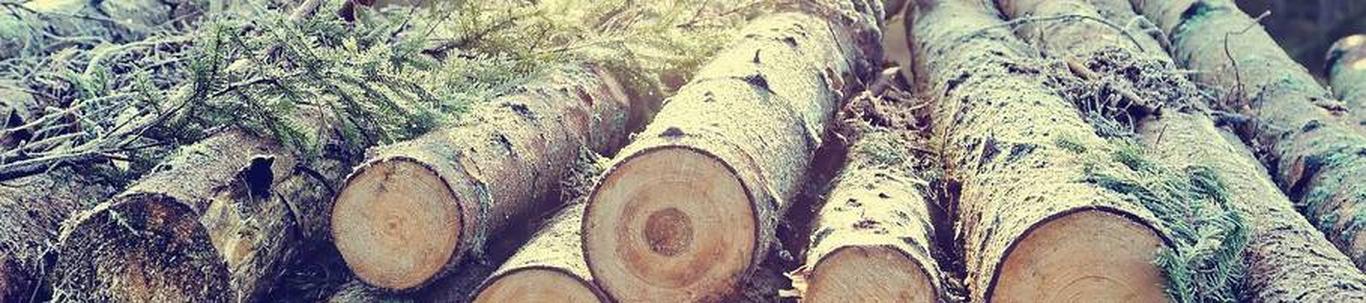 PUPSI AZ OÜ valdkond on küttepuude tootmine. Samas valdkonnas (EMTAK 02202) on tegutsevaid ettevõtteid 2021 aasta seisuga kokku 337 tükki, kes annavad tööd kokk
