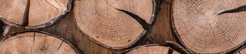 The birth of:  JAANUS TREES FIE