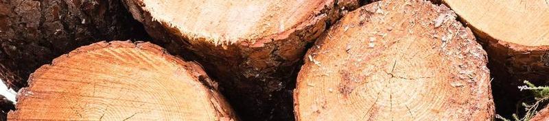 The birth of: URMAS TREES FIE