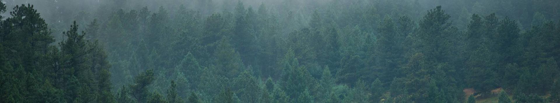 02401_metsamajanduse-abitegevused_18160134_xl.jpg