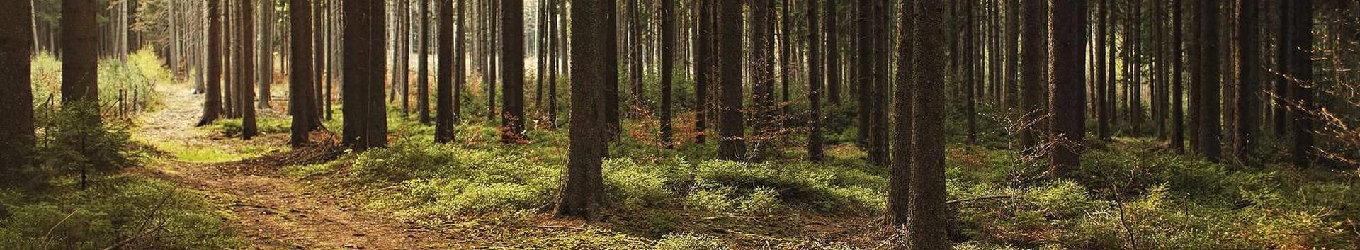 02401_metsamajanduse-abitegevused_28684918_xl.jpg